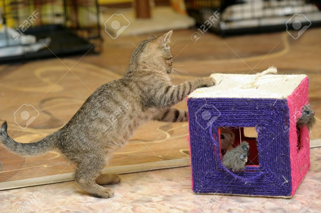 funny kitten playing Stock Photo - 16411737