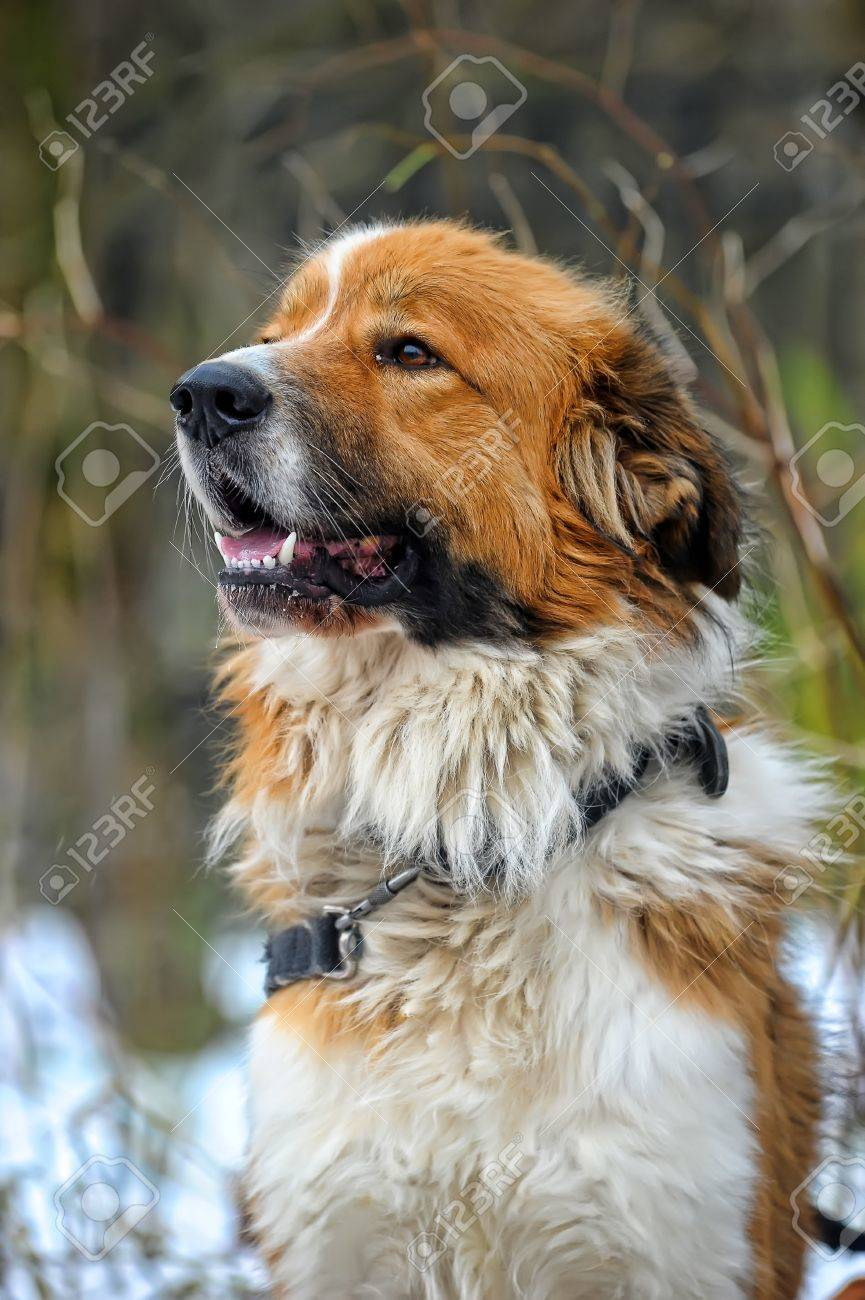 Watchdog Stock Photo - 16194236