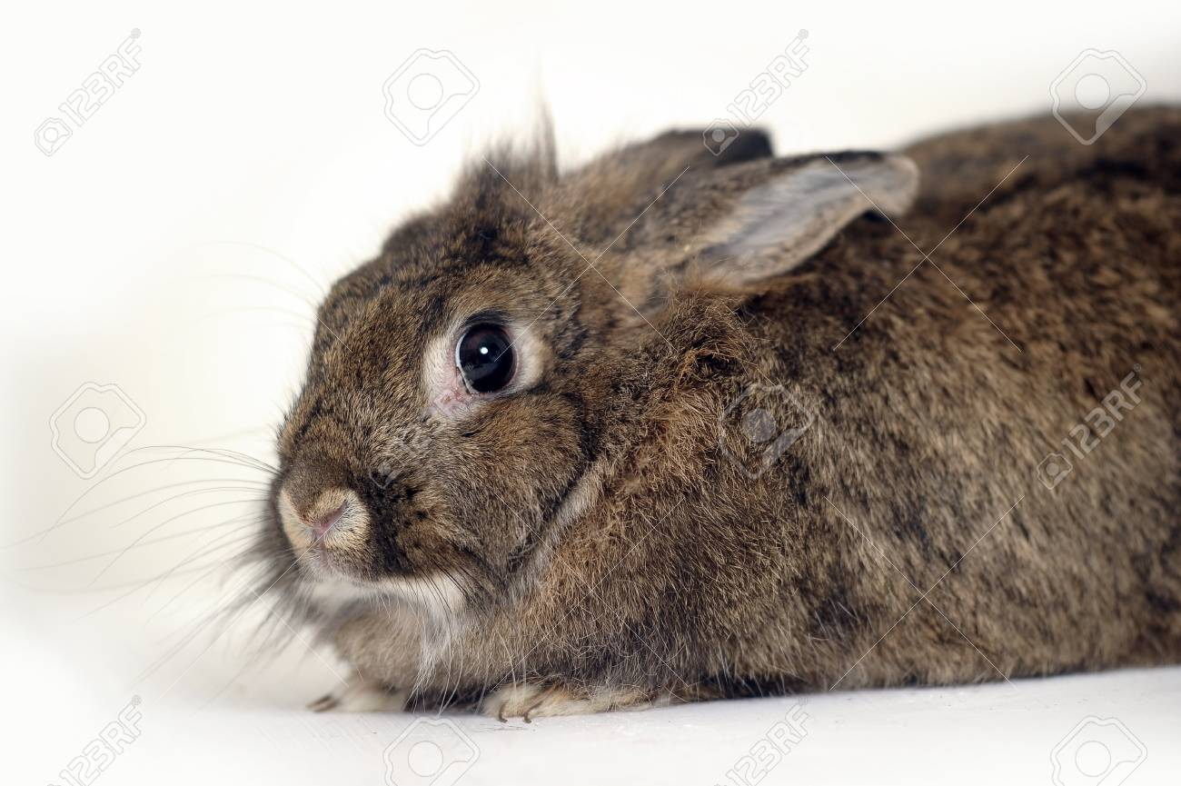 Gray rabbit sitting on white background Stock Photo - 16813504