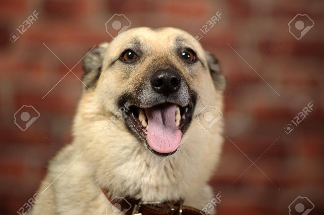 Cute Dog Stock Photo - 17167369