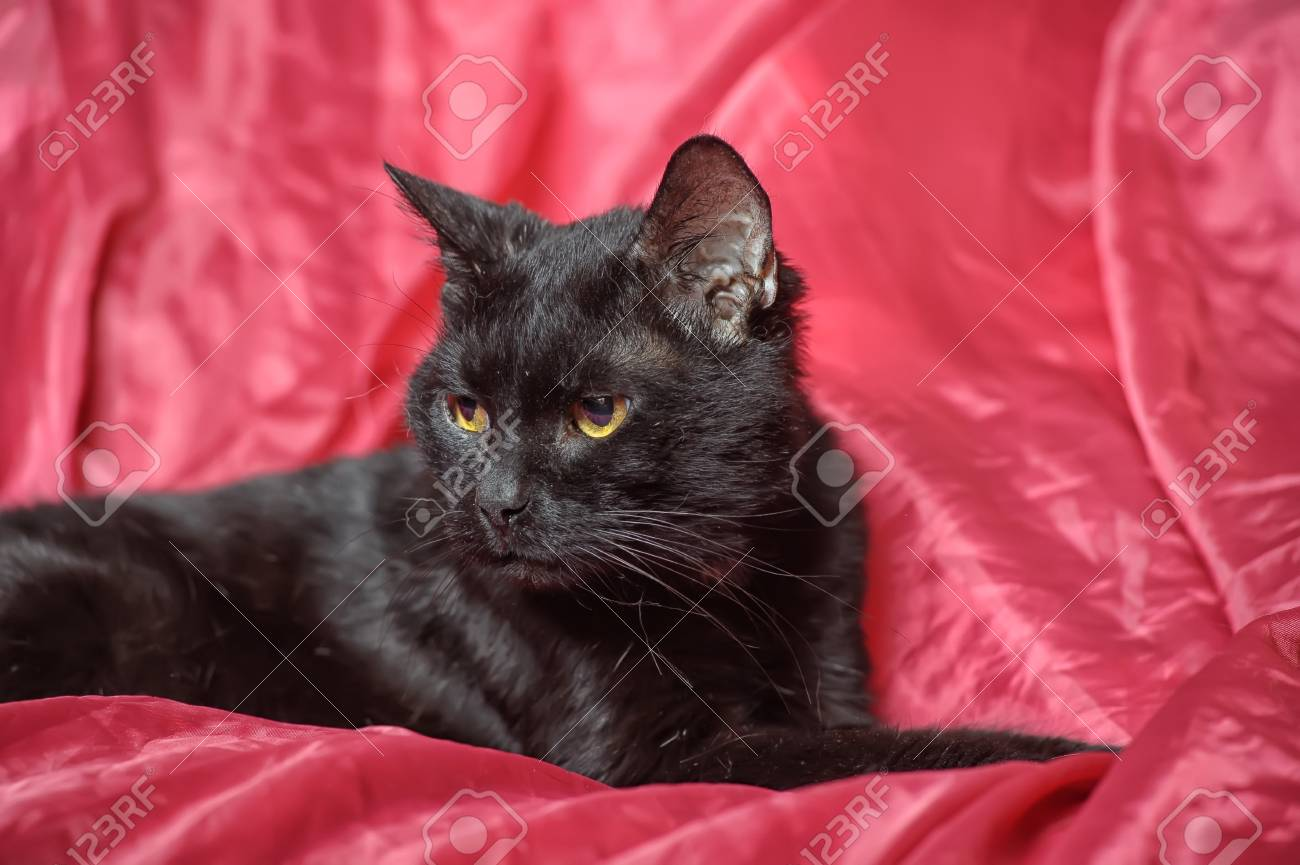 black cat on a red background Stock Photo - 17107413