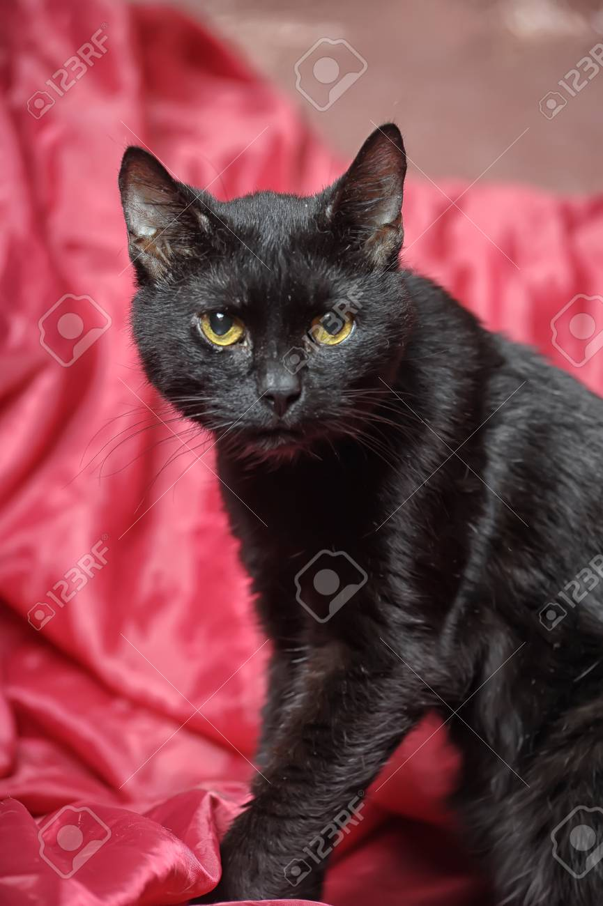 black cat on a red background Stock Photo - 17107382