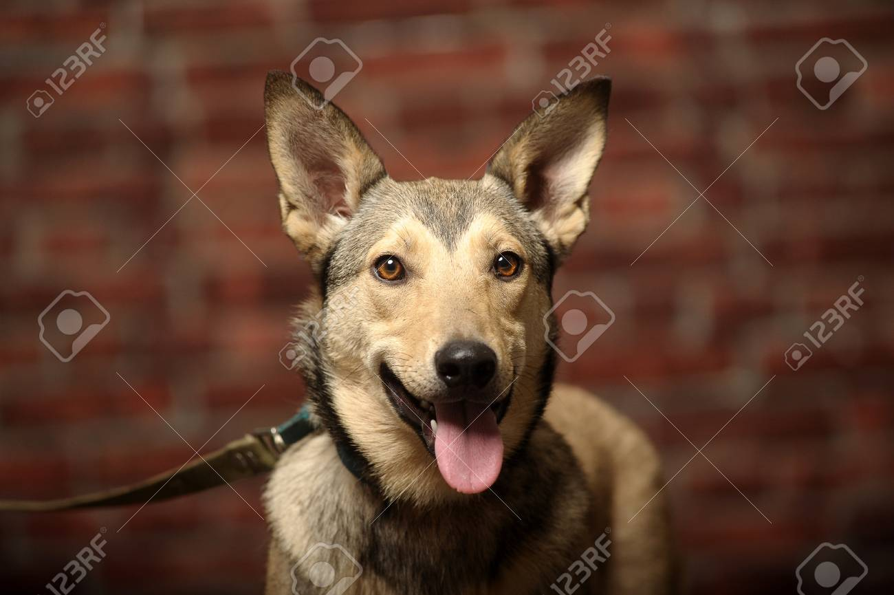 young mongrel dog Stock Photo - 17458555