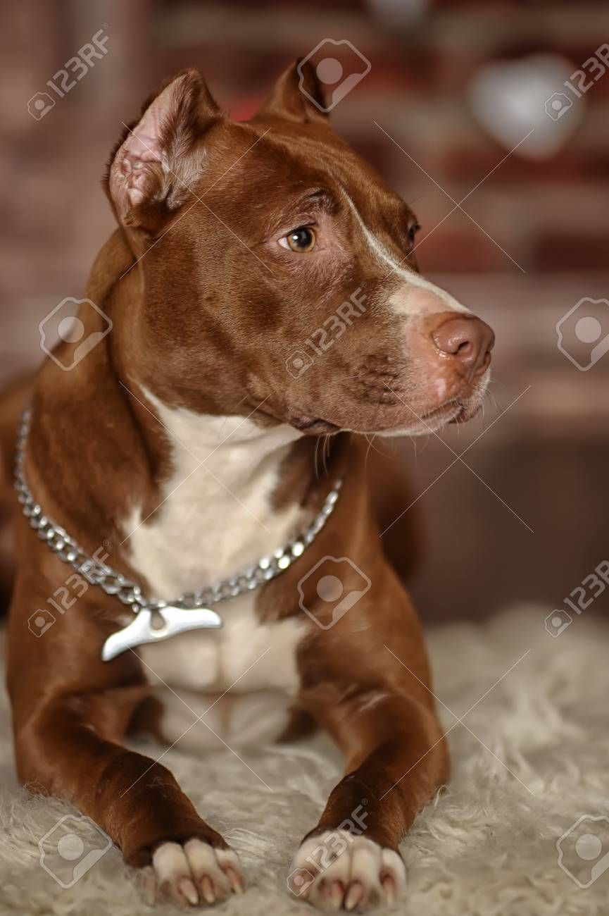 Studio dog Stock Photo - 17960182