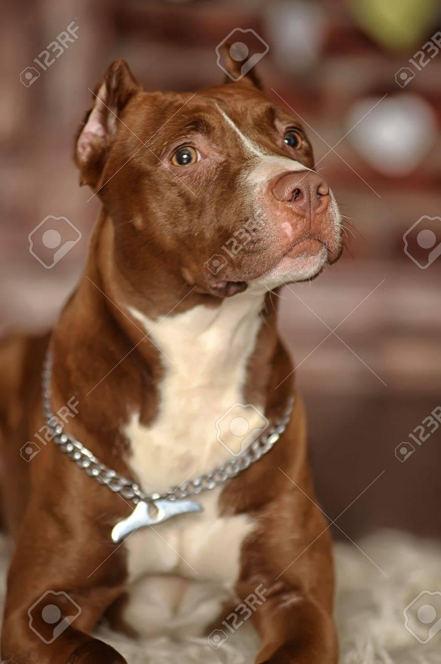 Studio dog Stock Photo - 17960133