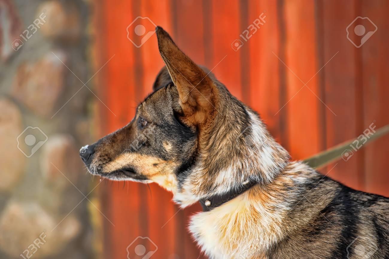 dog on a leash Stock Photo - 19028219