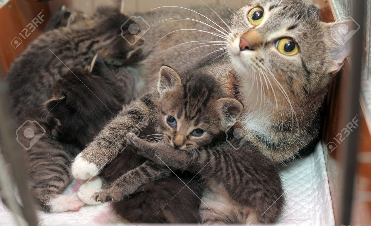 Mother Cat With Kittens Striped Stock Picture And Royalty