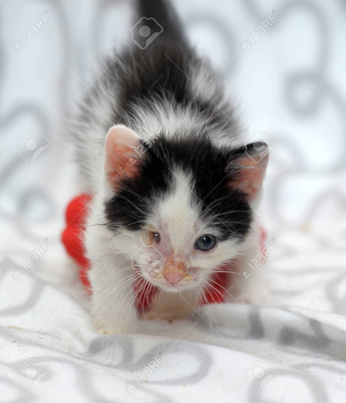 small kitten with diseased eyes rescued zoo defenders Stock Photo - 19577542