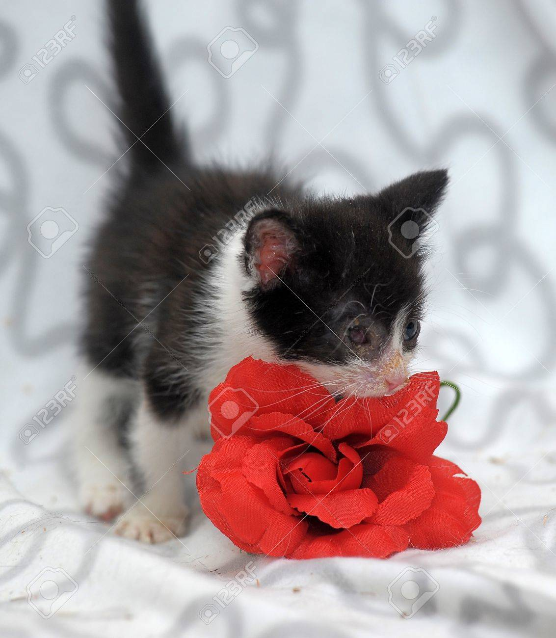 small kitten with diseased eyes rescued zoo defenders Stock Photo - 19605152