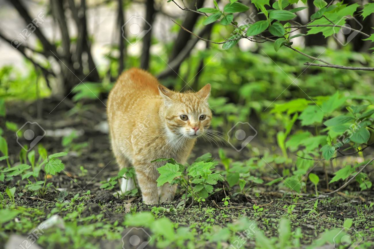 Cat take a walk on the grass close up Stock Photo - 21025553