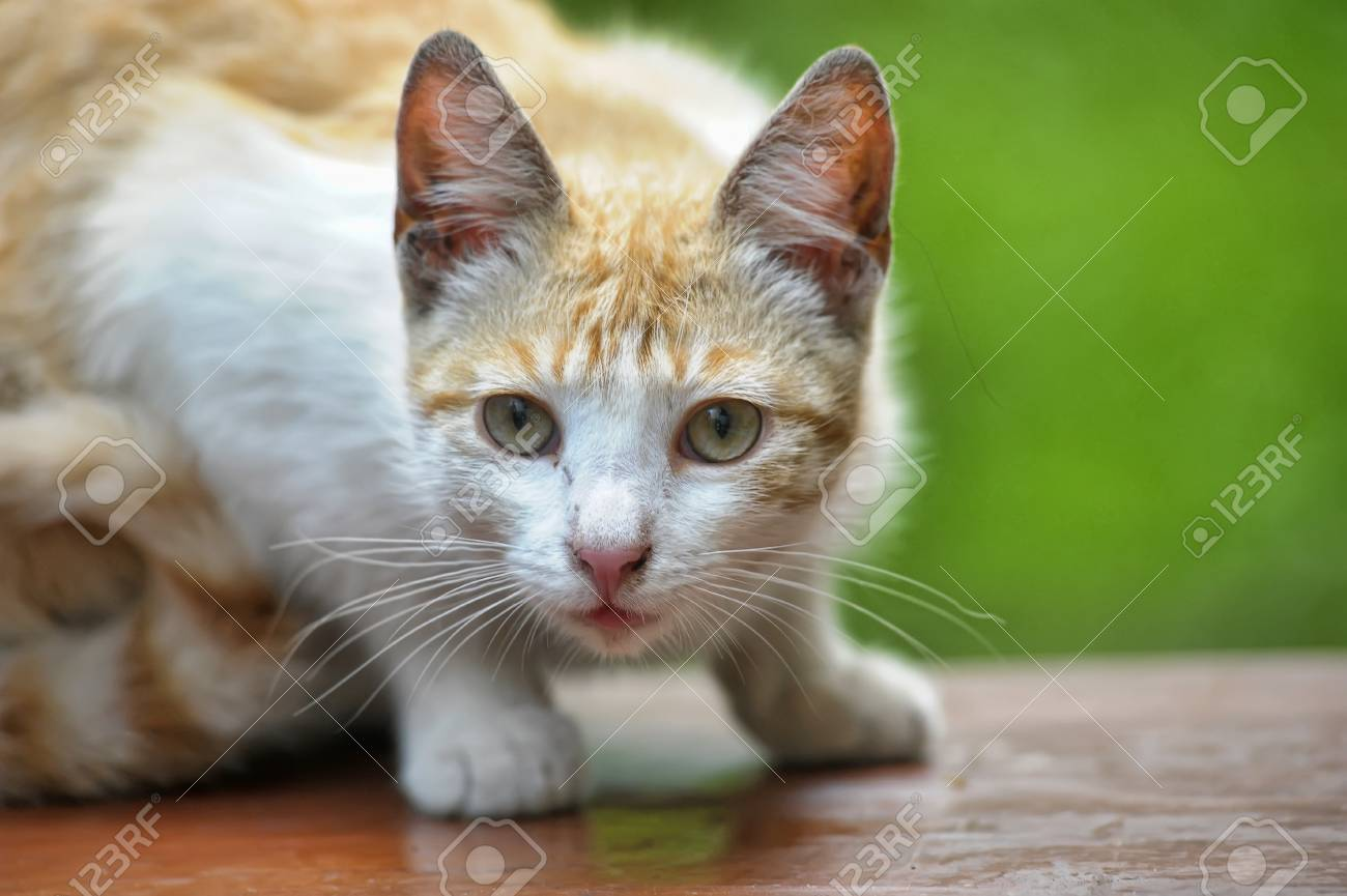 Cat take a walk on the grass close up Stock Photo - 21025562