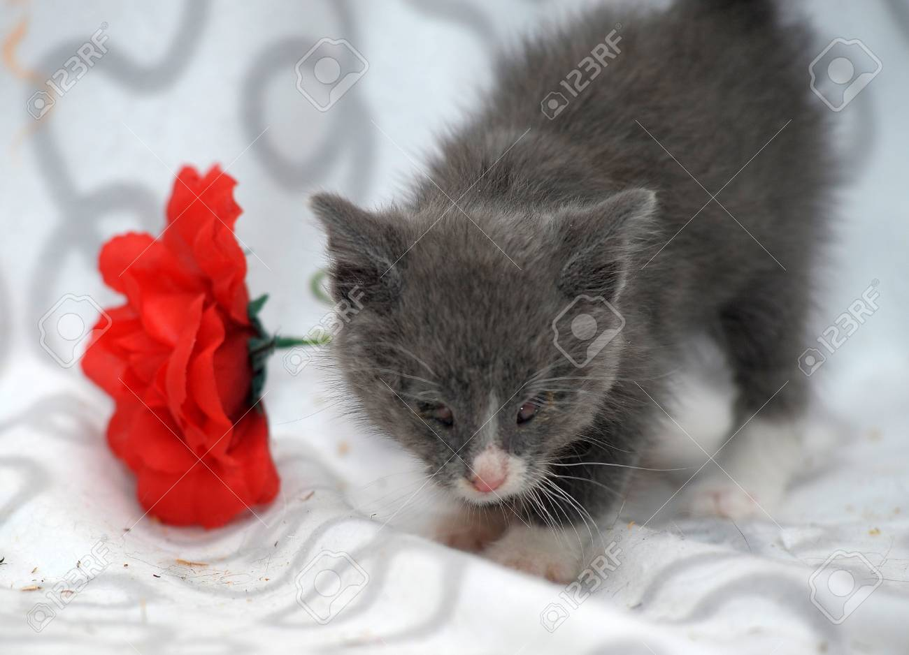 small kitten with diseased eyes rescued zoo defenders Stock Photo - 19912293