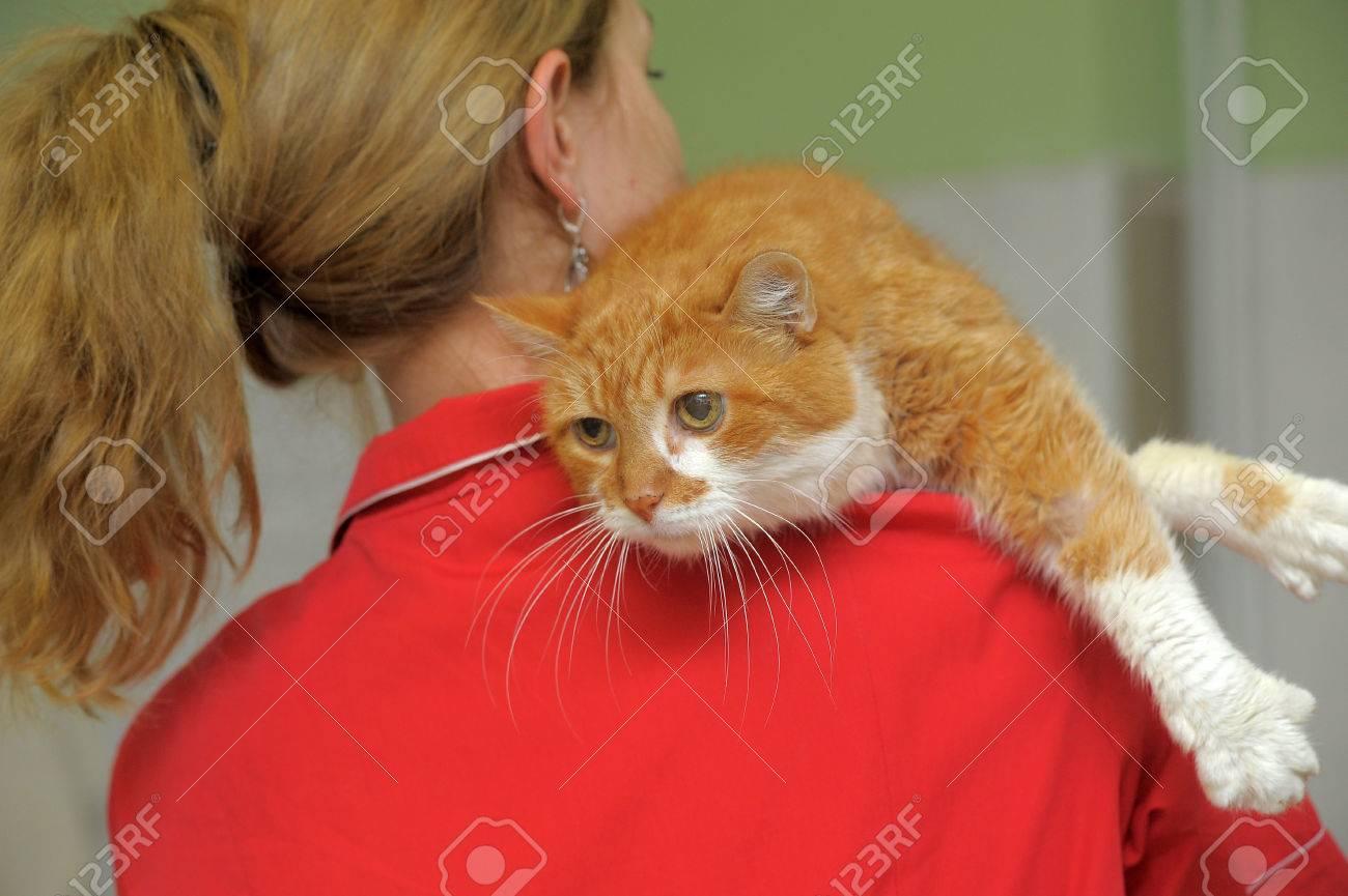 large cat Stock Photo - 23225089