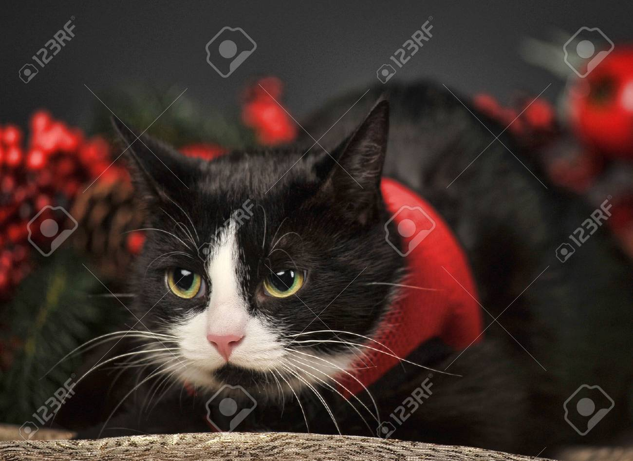 Black cat with Christmas  background Stock Photo - 23580305