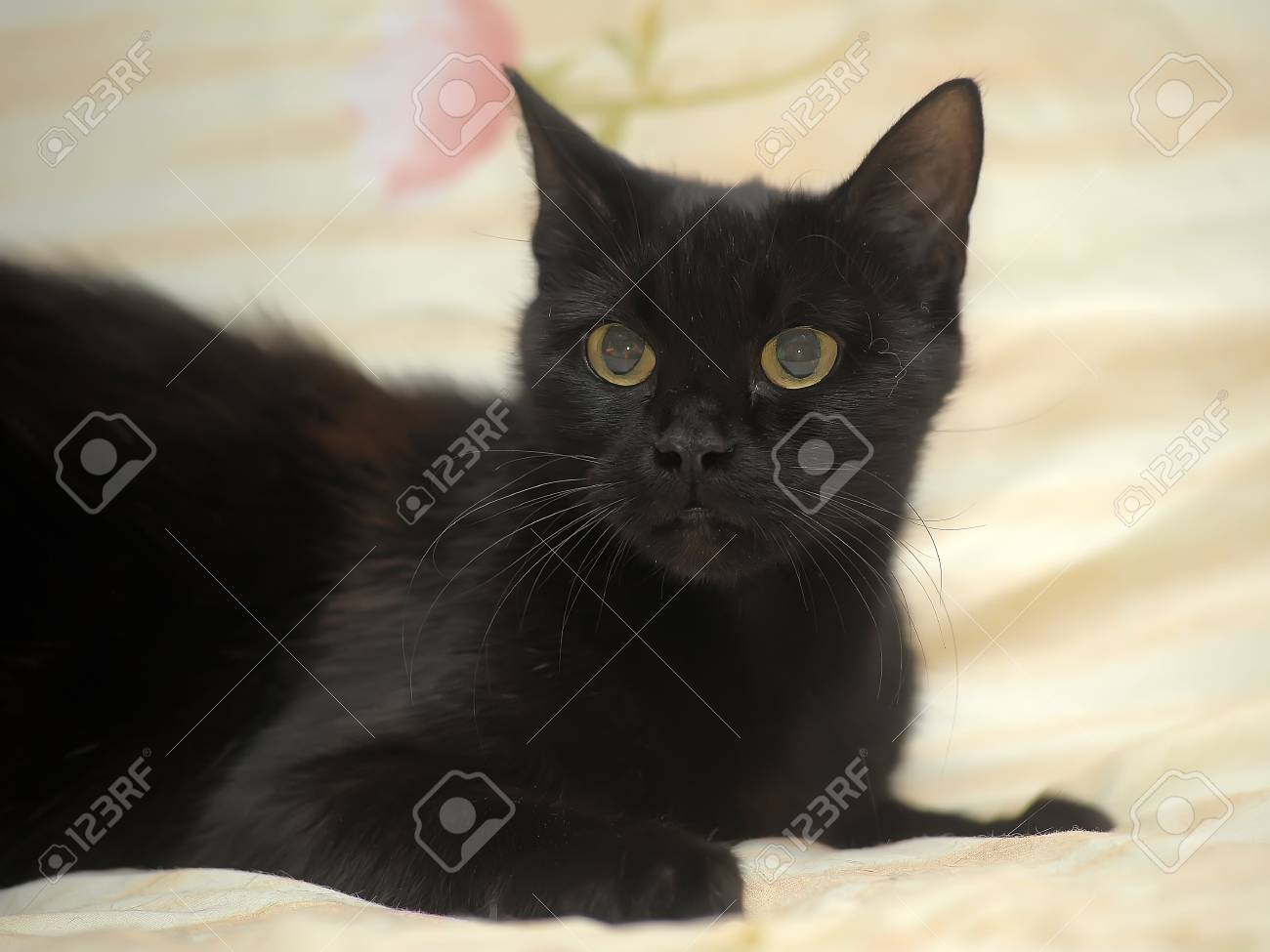 Black Cat On Yellow Background Stock Photo Picture And Royalty Free Image Image 35102050