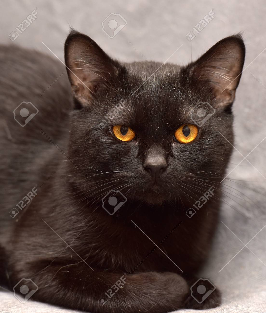 Black cat with orange eyes.