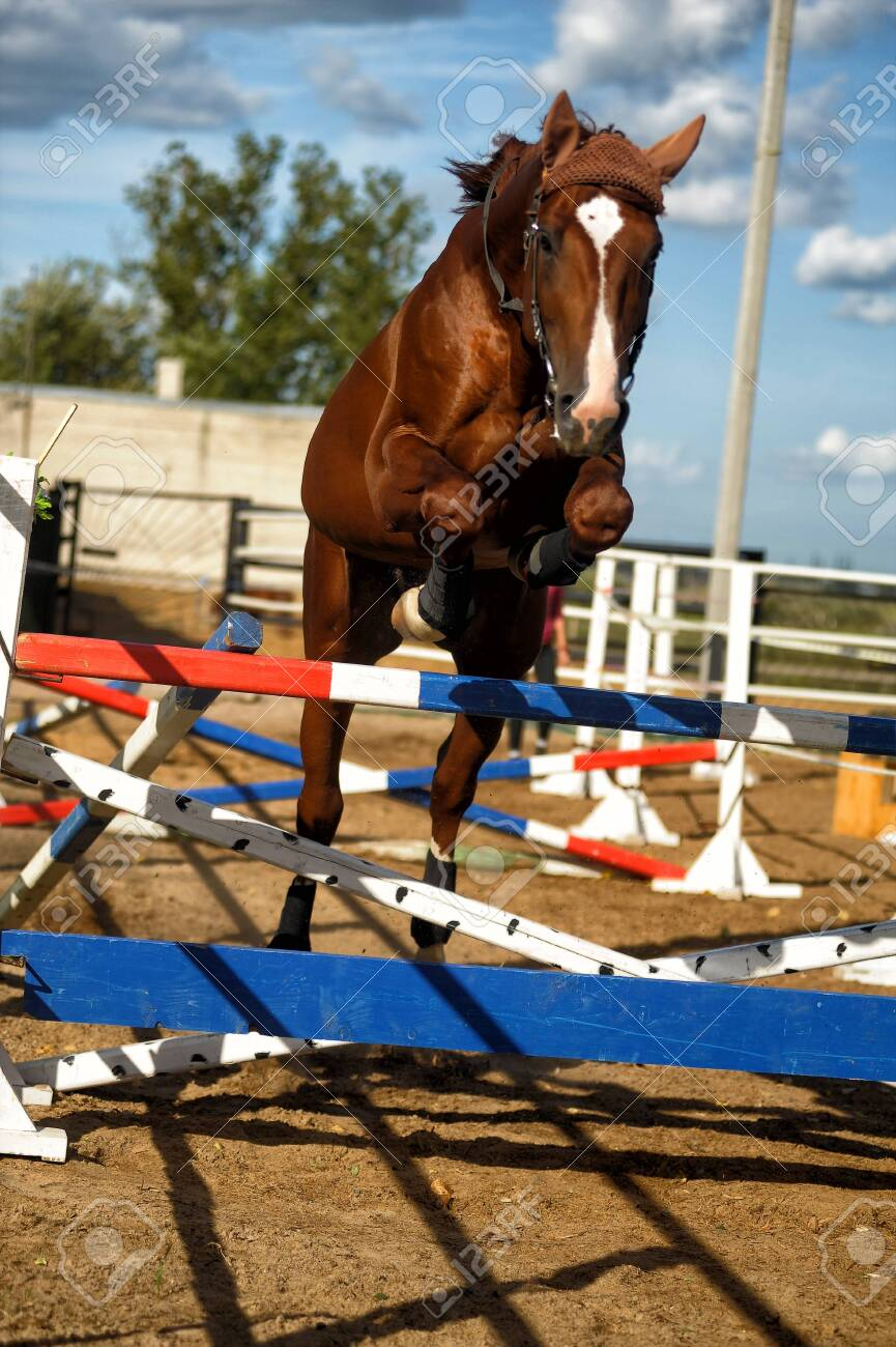 Brown Horse Jumps Over Obstacles In Training Stock Photo Picture And Royalty Free Image Image 137758307