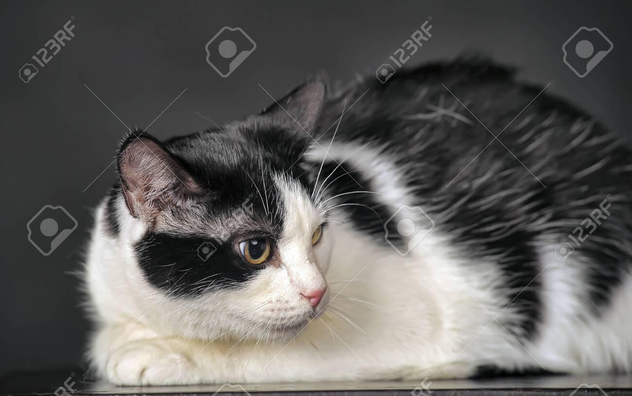 white with black cat in studio - 148324858