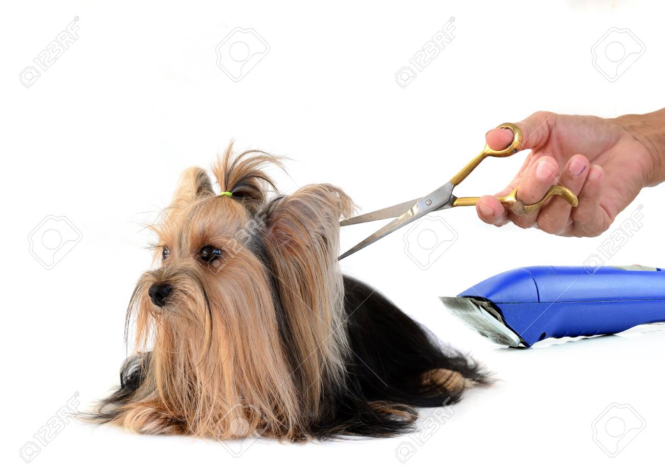 care for dog hair. isolated on white background Stock Photo - 28098588