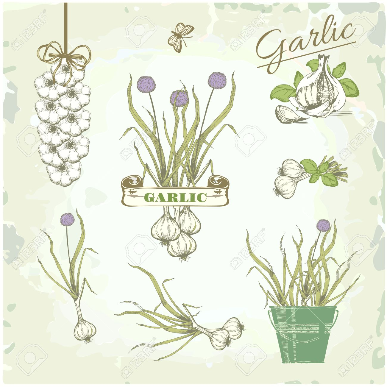 Garlic Vegetables Herb Plant Cusine Vintage Background Packaging Royalty Free Cliparts Vectors And Stock Illustration Image 23075806