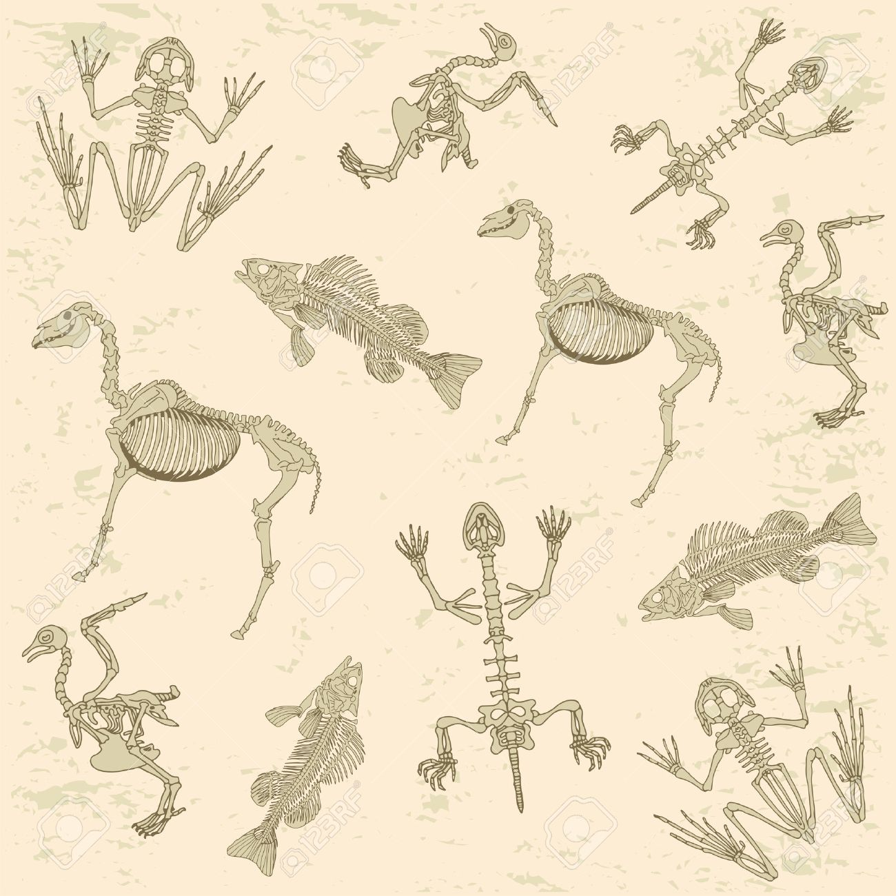 Animales Anatomía, Esqueleto Del Caballo, La Paloma, La Rana Y La ...