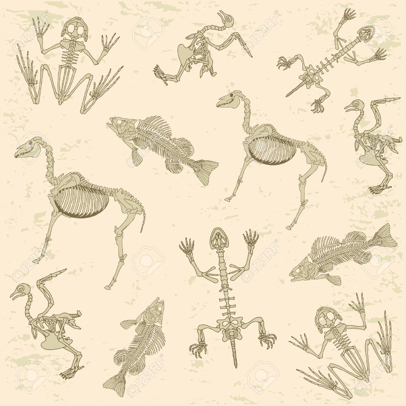 Tiere Anatomie, Skelett Des Pferdes, Taube, Frosch Und Schildkröte ...