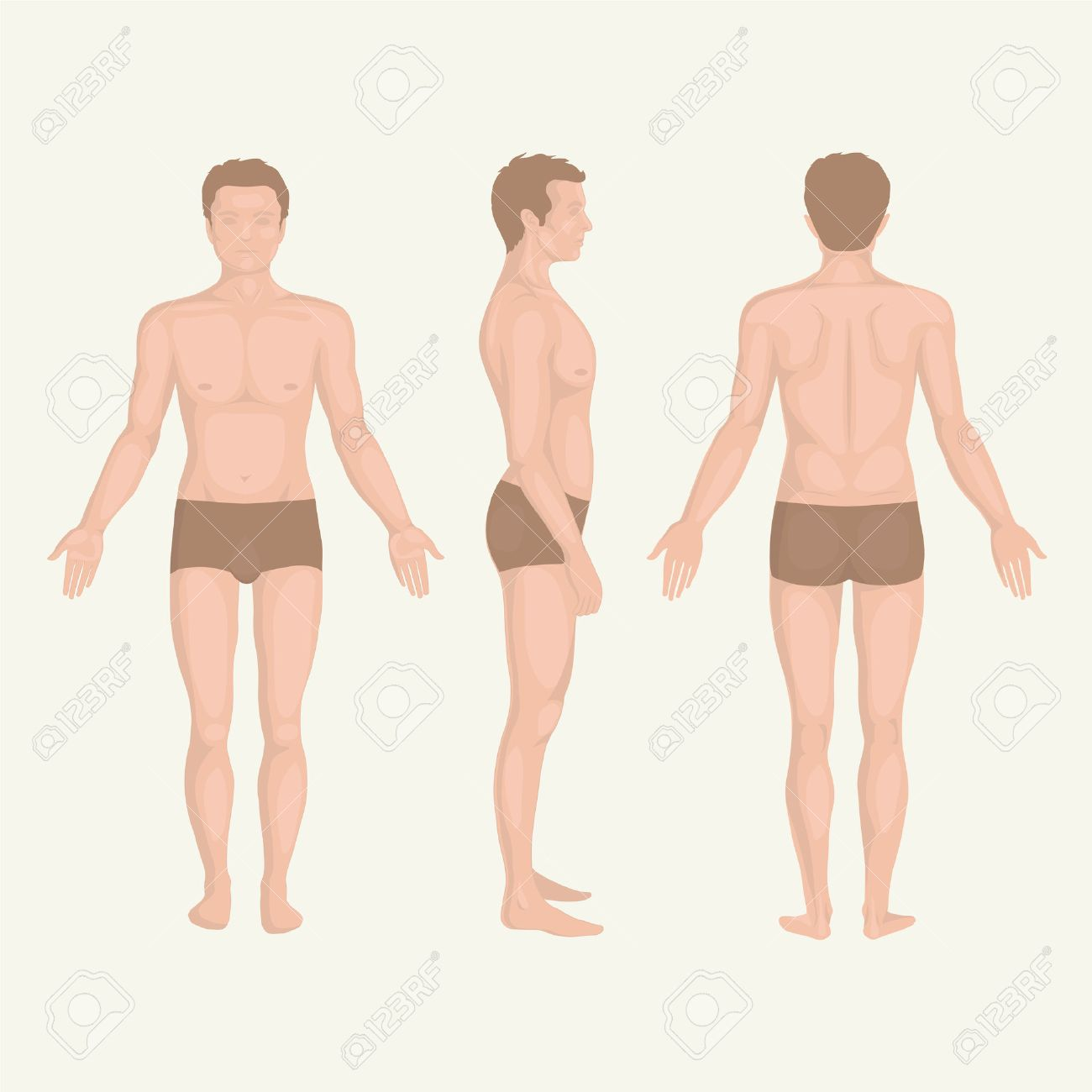 Man Body Anatomy Front Back And Side Standing Pose Royalty Free