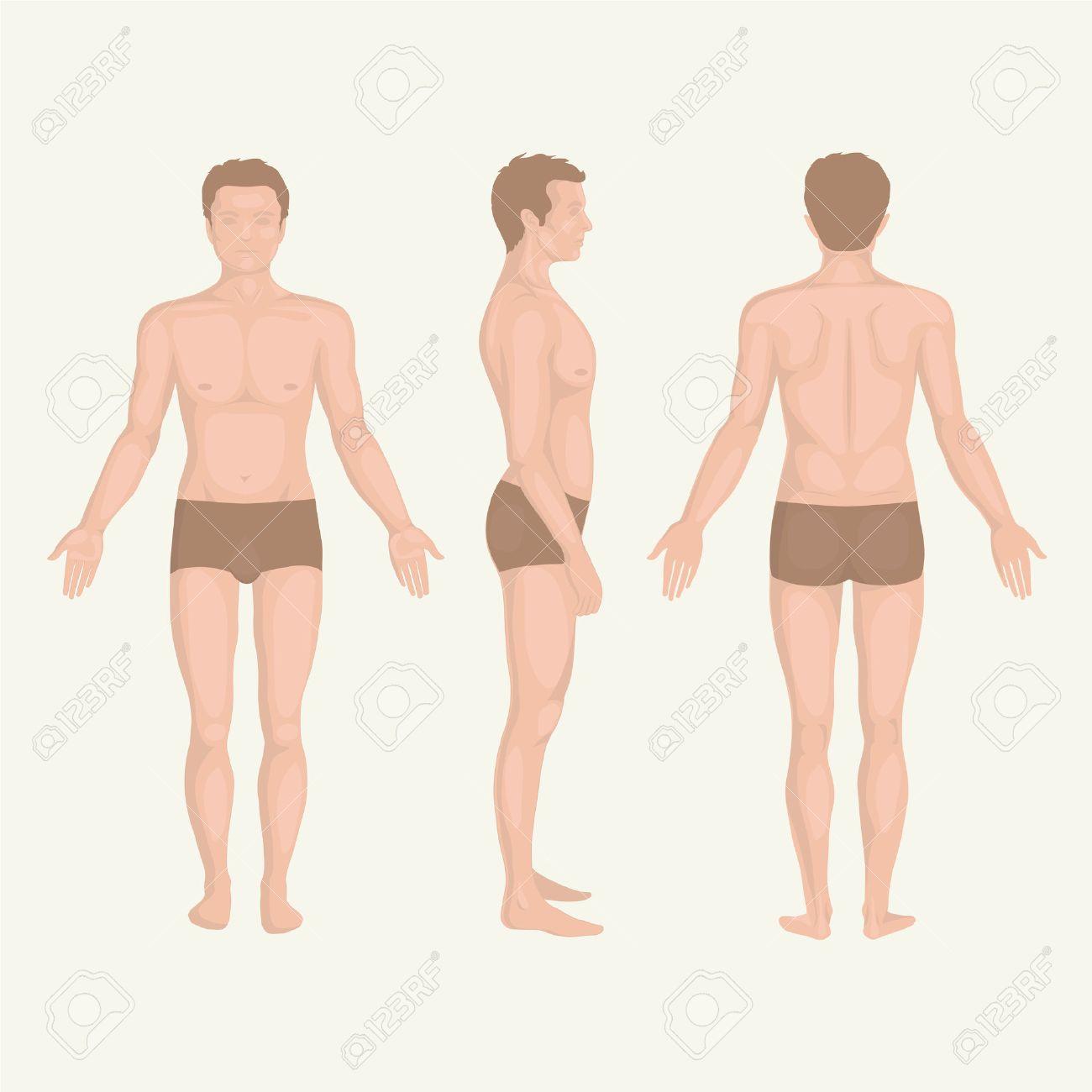 Mann Körper Anatomie, Vorne, Hinten Und Seitlich Stehenden Haltung ...