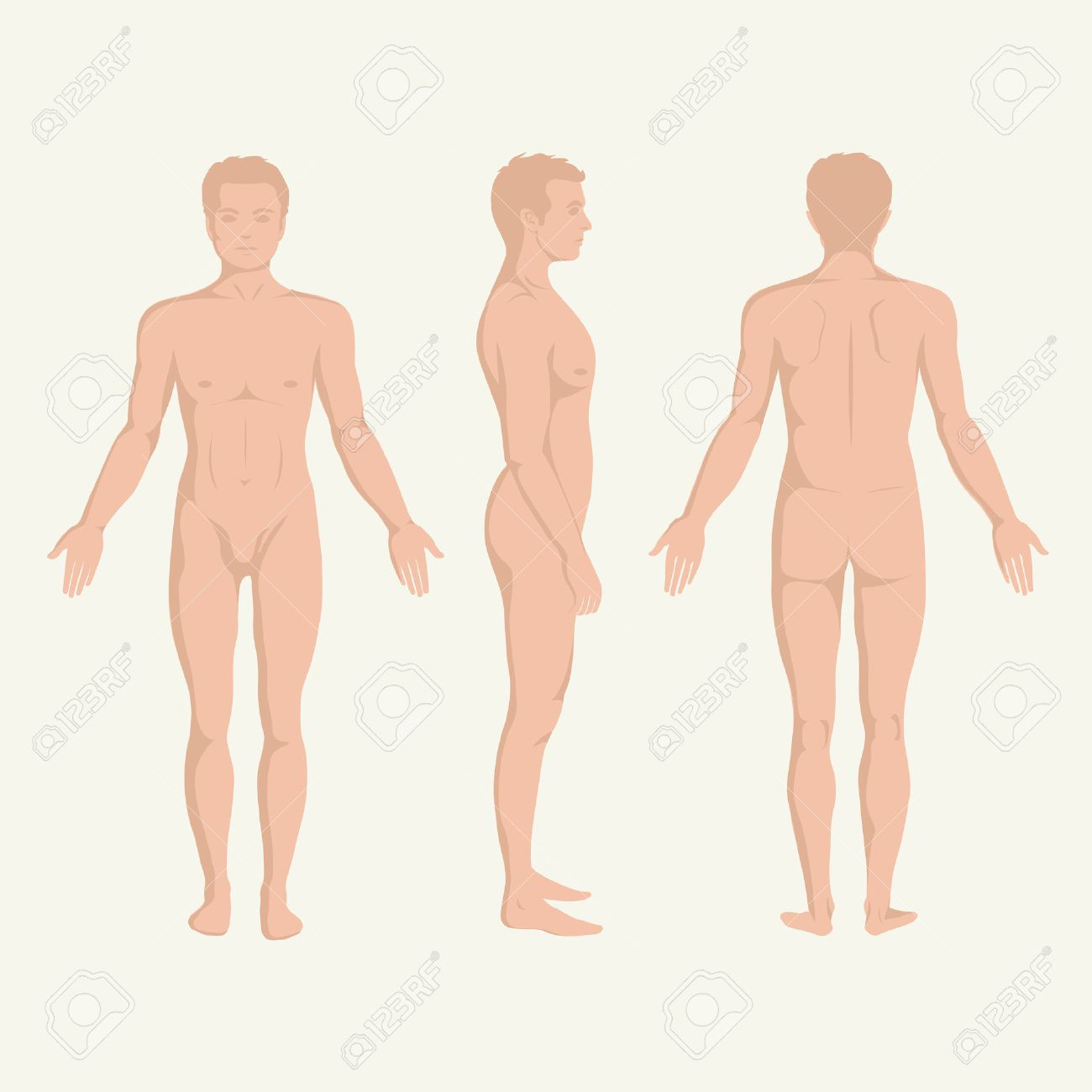 Man Body Anatomy, Front, Back And Side Standing Human Pose Royalty ...