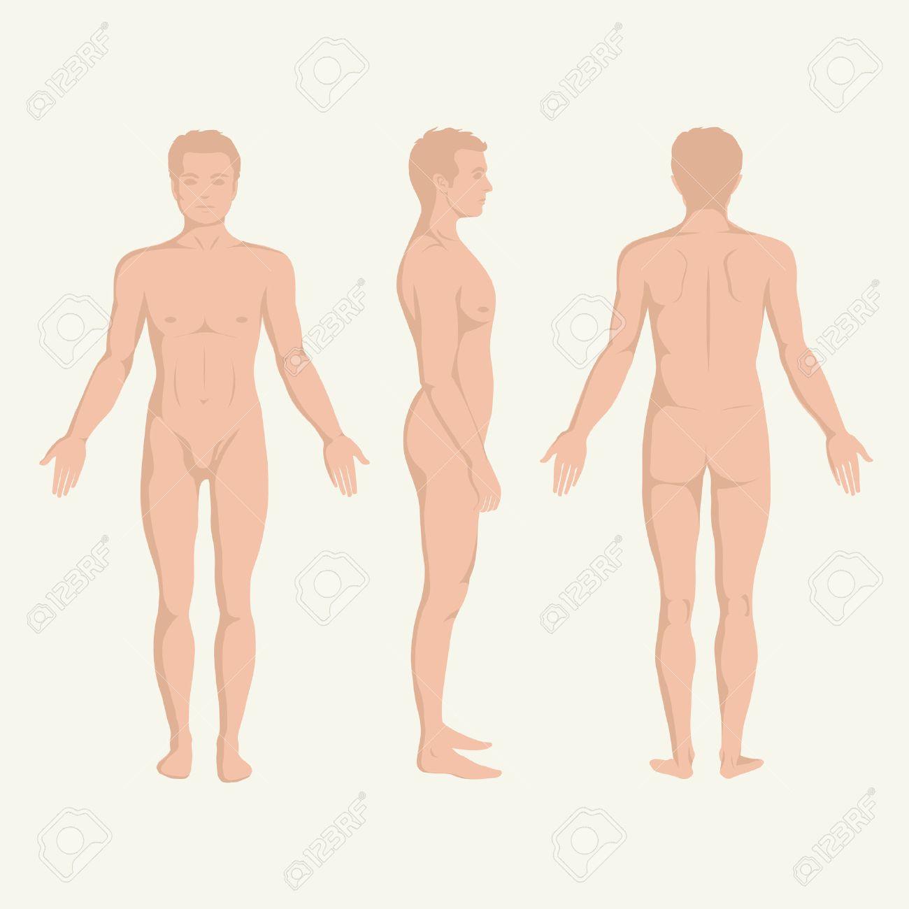 Mann Körper Anatomie, Vorne, Hinten Und Seitlich Stehenden ...