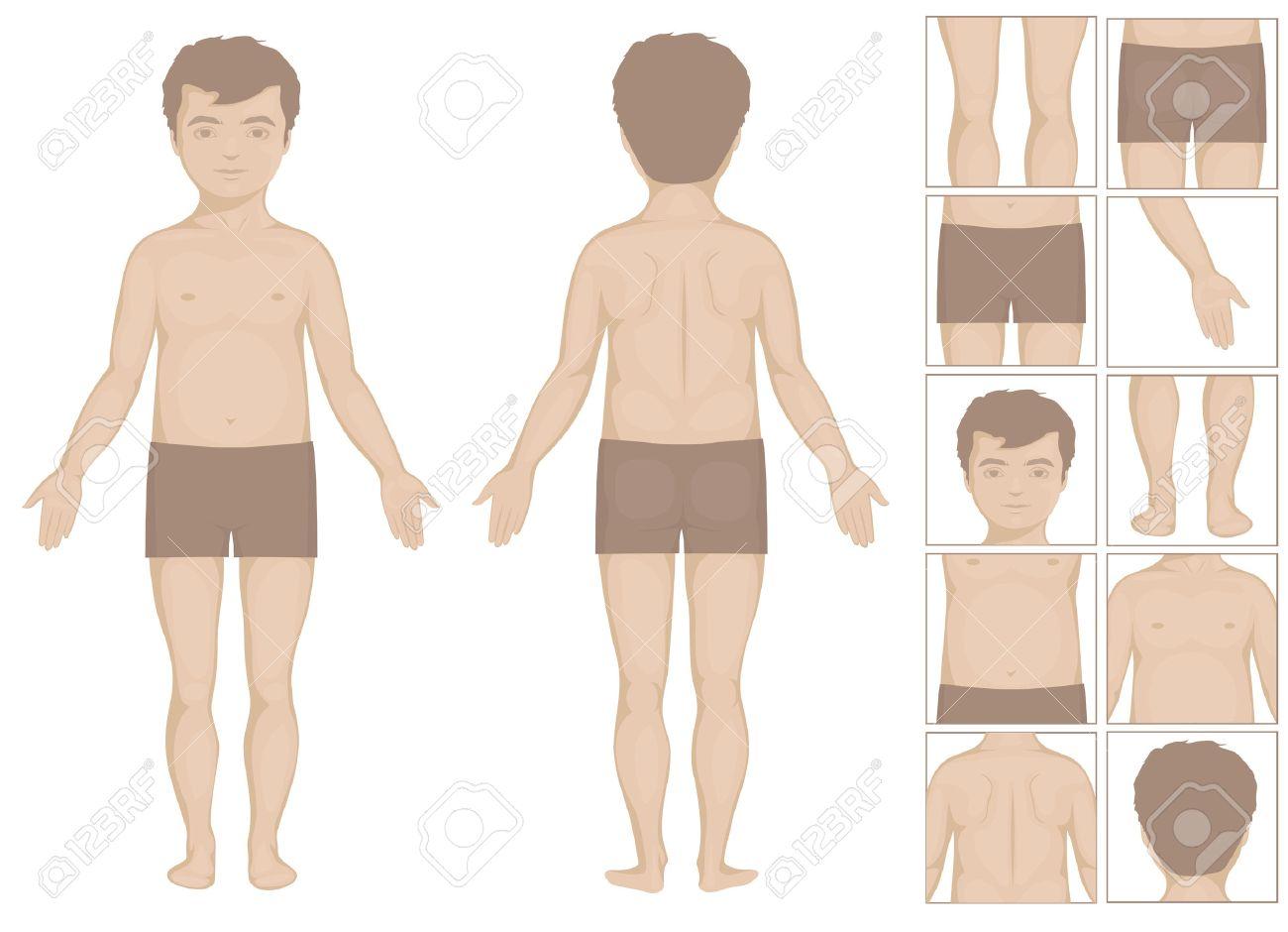 Partes Del Cuerpo Humano O De Niño, Ilustración Vectorial De Dibujos ...