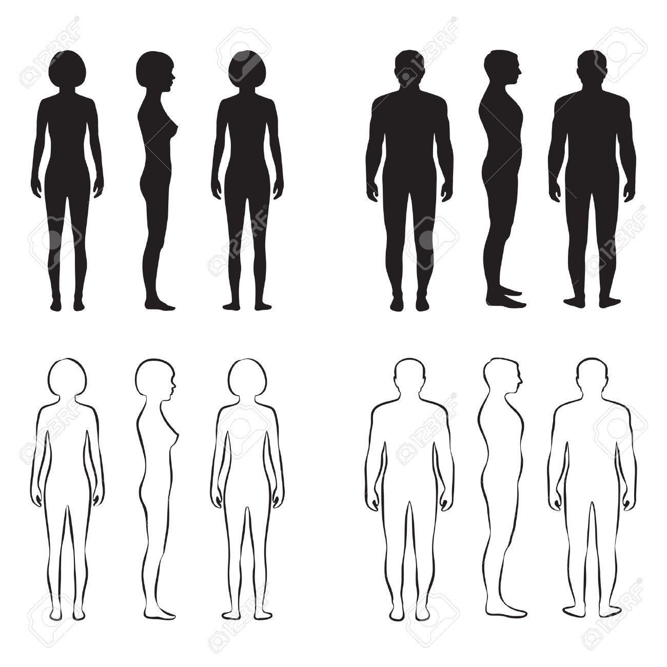 Körper Anatomie, Vorne Vektor Mann, Frau Silhouette Lizenzfrei ...