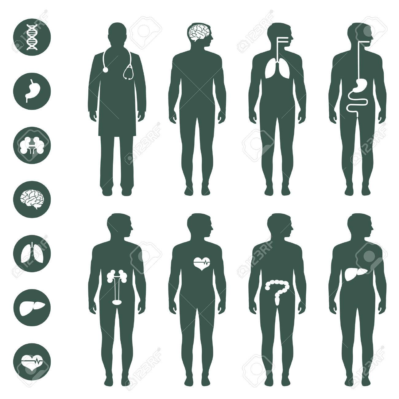 human body anatomy vector medical organs icon royalty free cliparts vectors and stock illustration image 37163663 human body anatomy vector medical organs icon