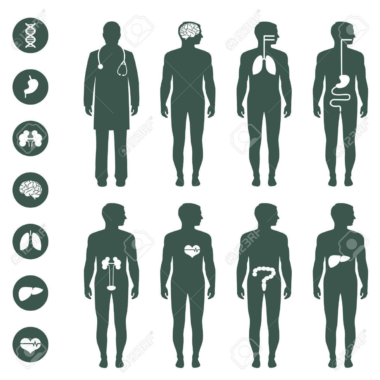 Körper Anatomie, Vektor Medizinische Organe Symbol, Lizenzfrei ...