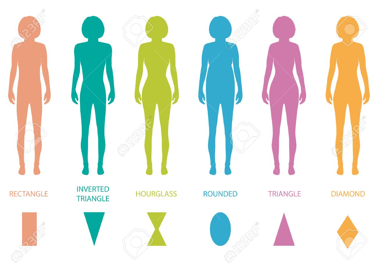 b98848f0d Female Body Types Anatomy