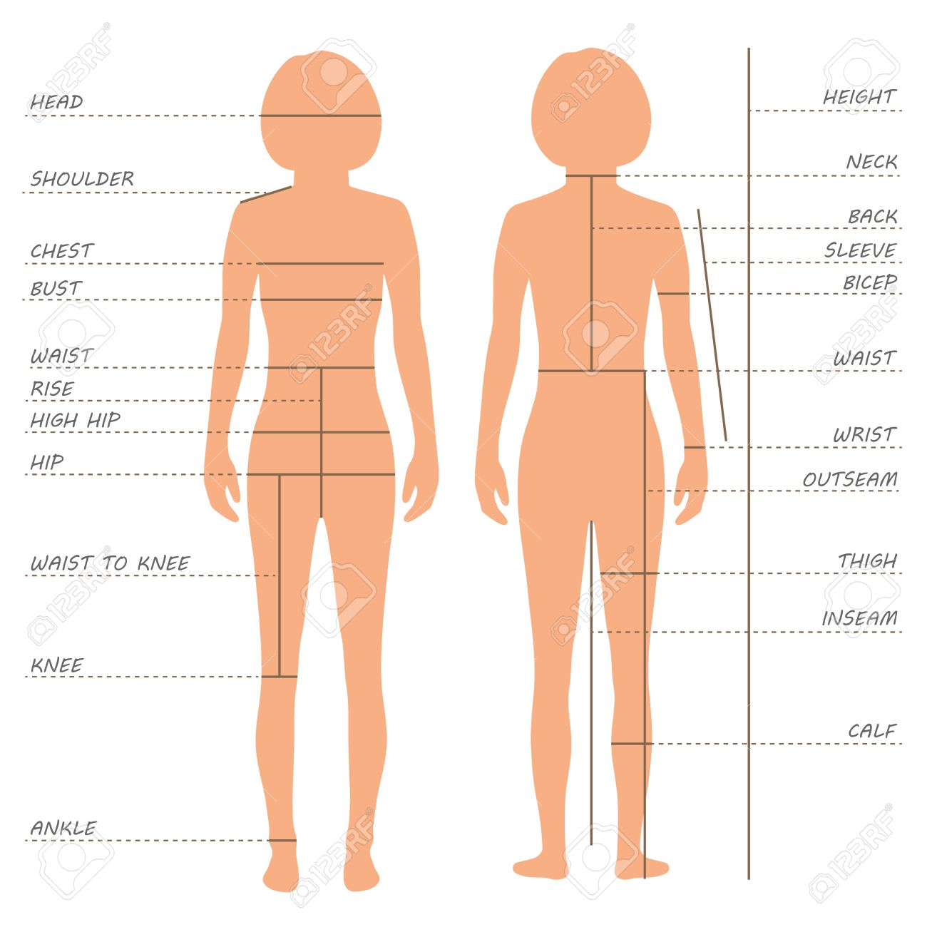57a7a843c081b Vector - vector body measurements size chart
