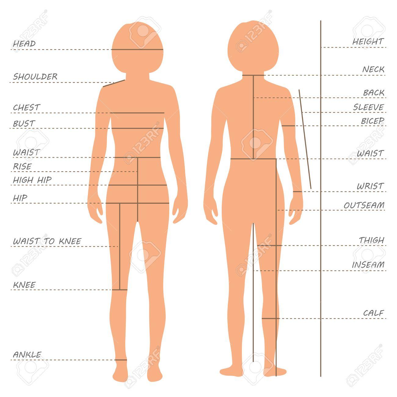 Vector Körpermaße Größentabelle, Weibliche Kleidung Modell, Nähen ...