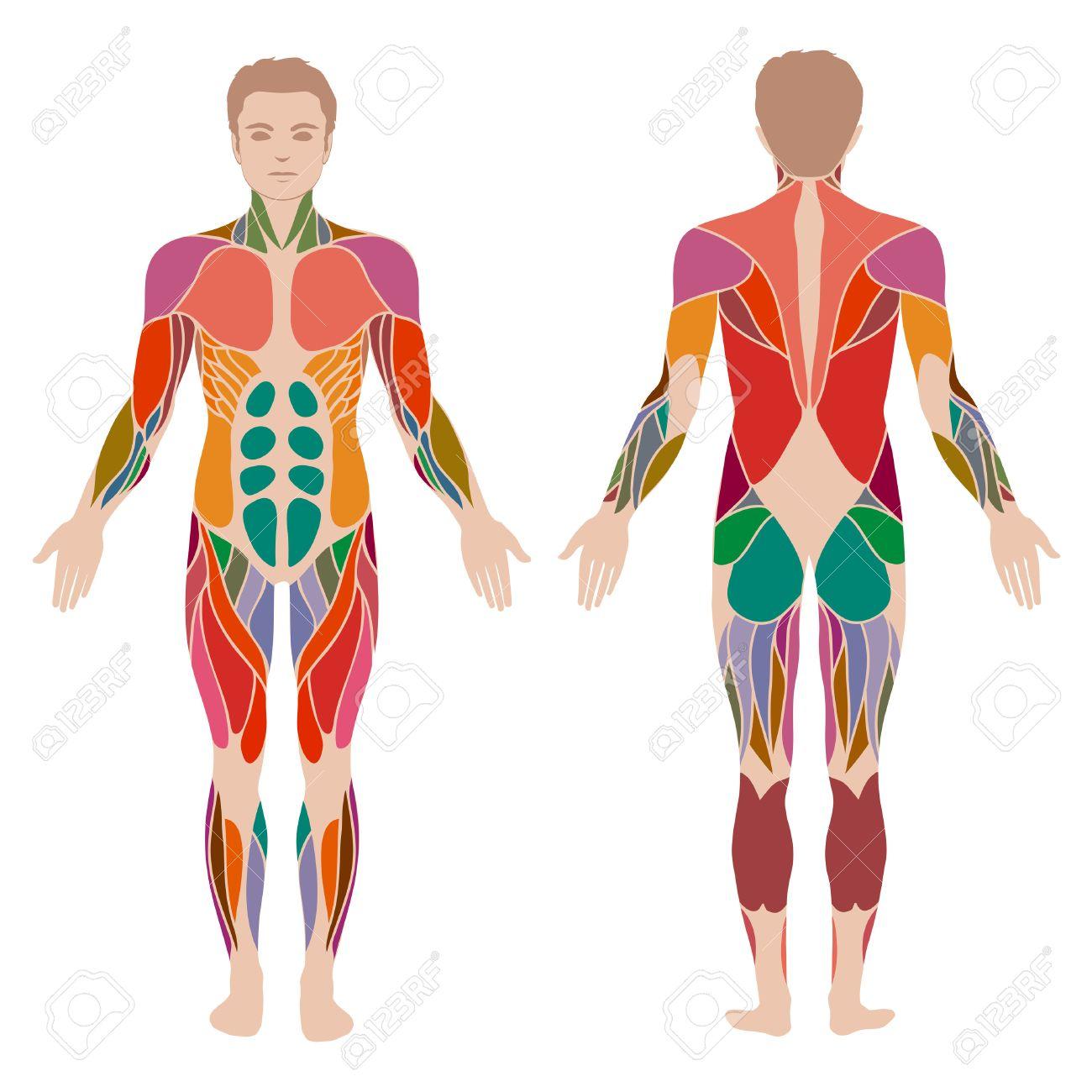 Großzügig A1 Riemenscheibe Daumen Anatomie Fotos - Physiologie Von ...