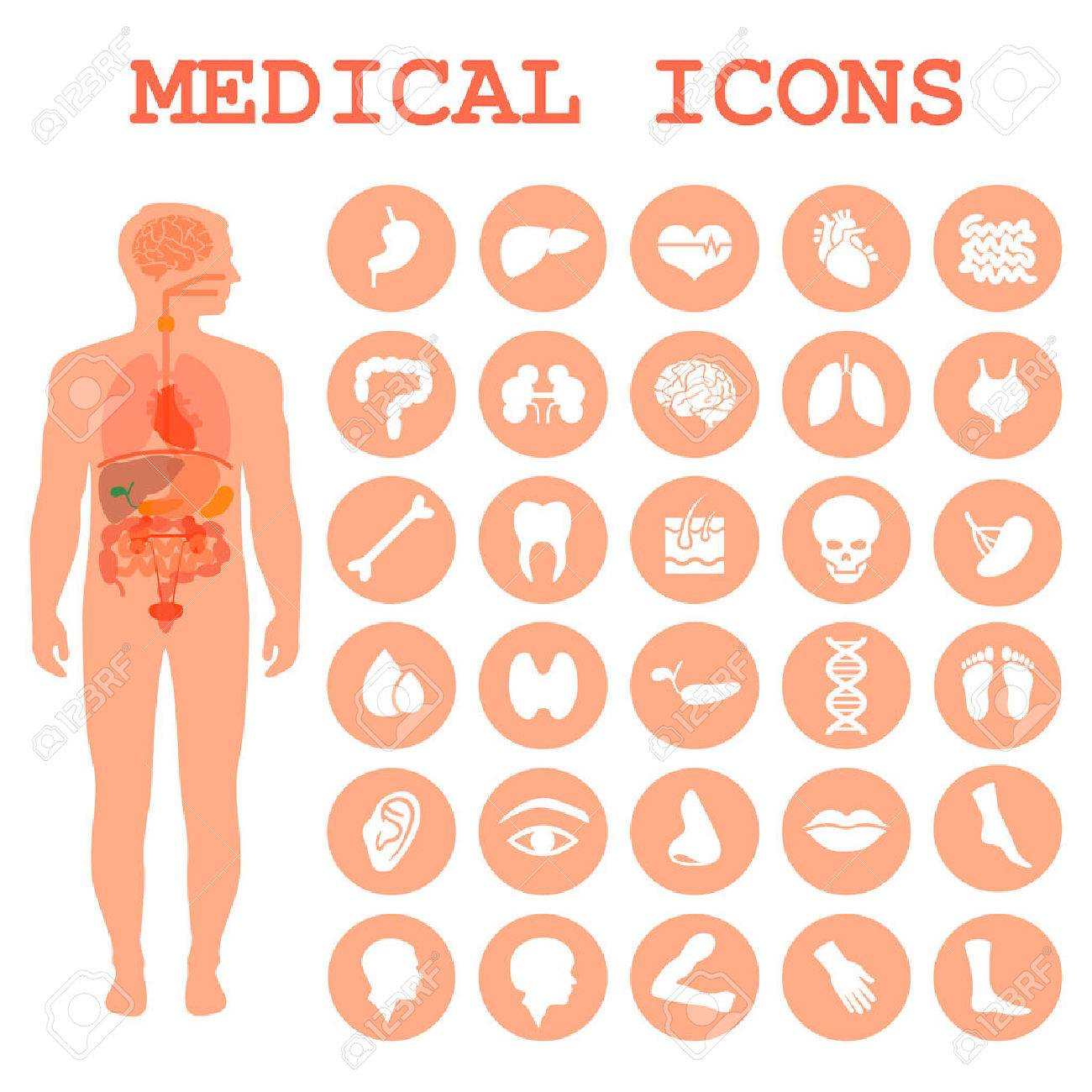 Medical Infographic Icons, Human Organs, Body Anatomy Royalty Free ...