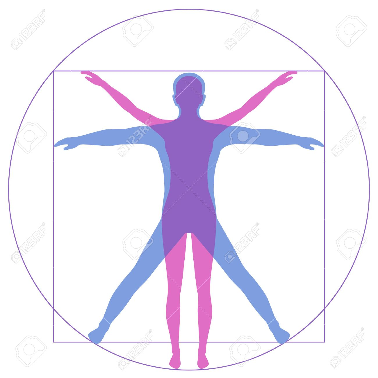 Leonardo Da Vinci Vetruvian Man, human anatomy - 54711988