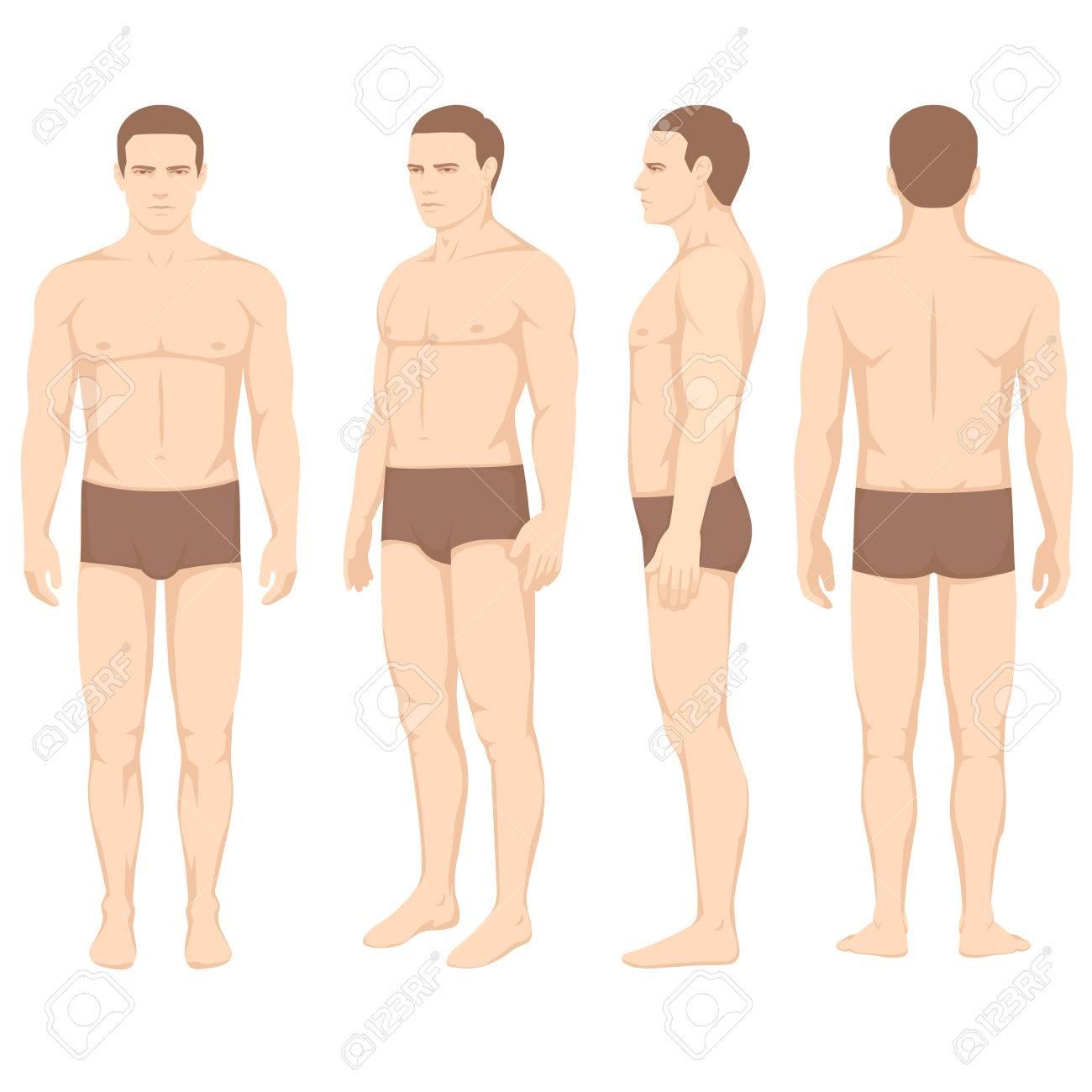 Nett Menschlicher Körper Anatomie Bilder Ideen - Physiologie Von ...