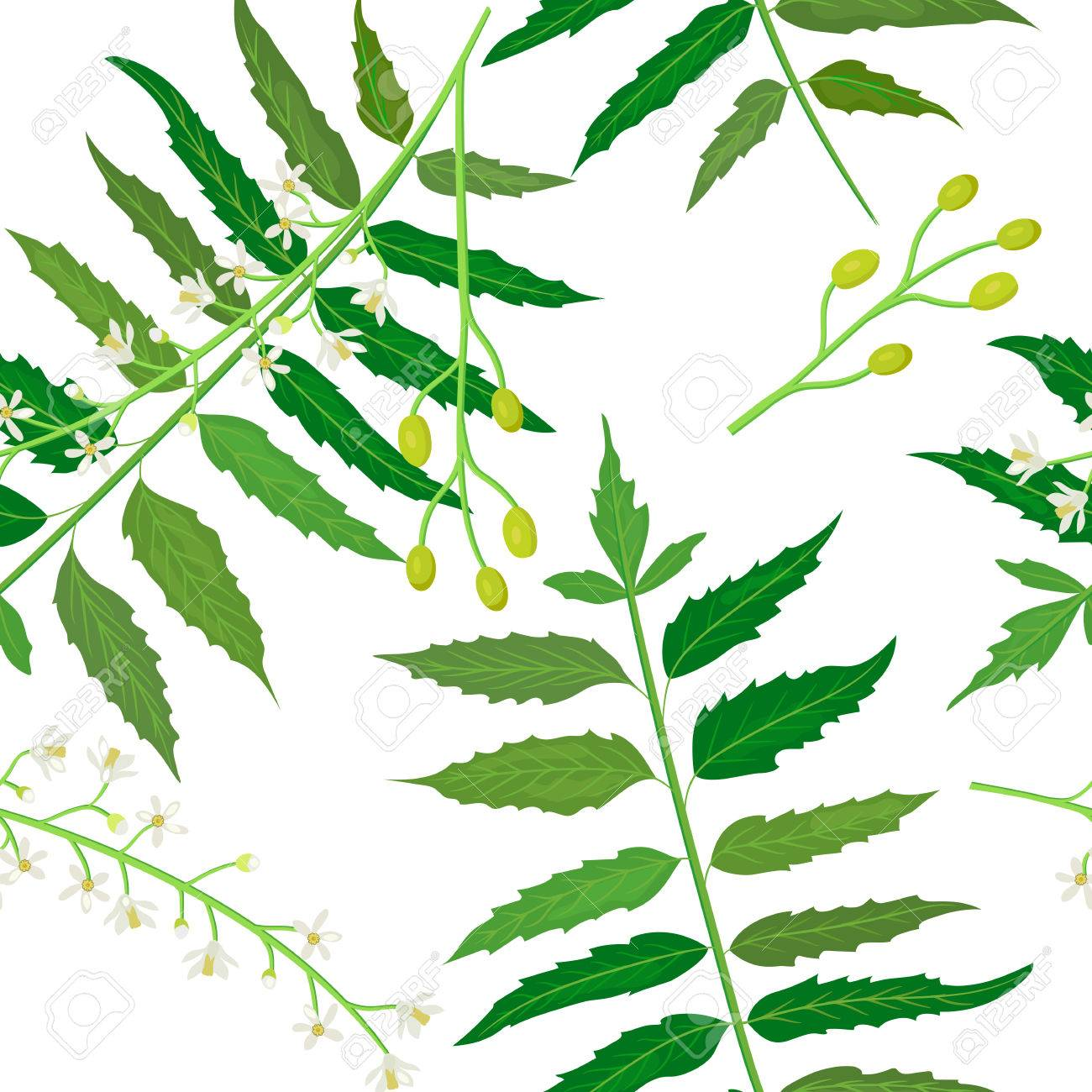 Neem Or Nimtree Seamless Pattern Vector Royalty Free Cliparts