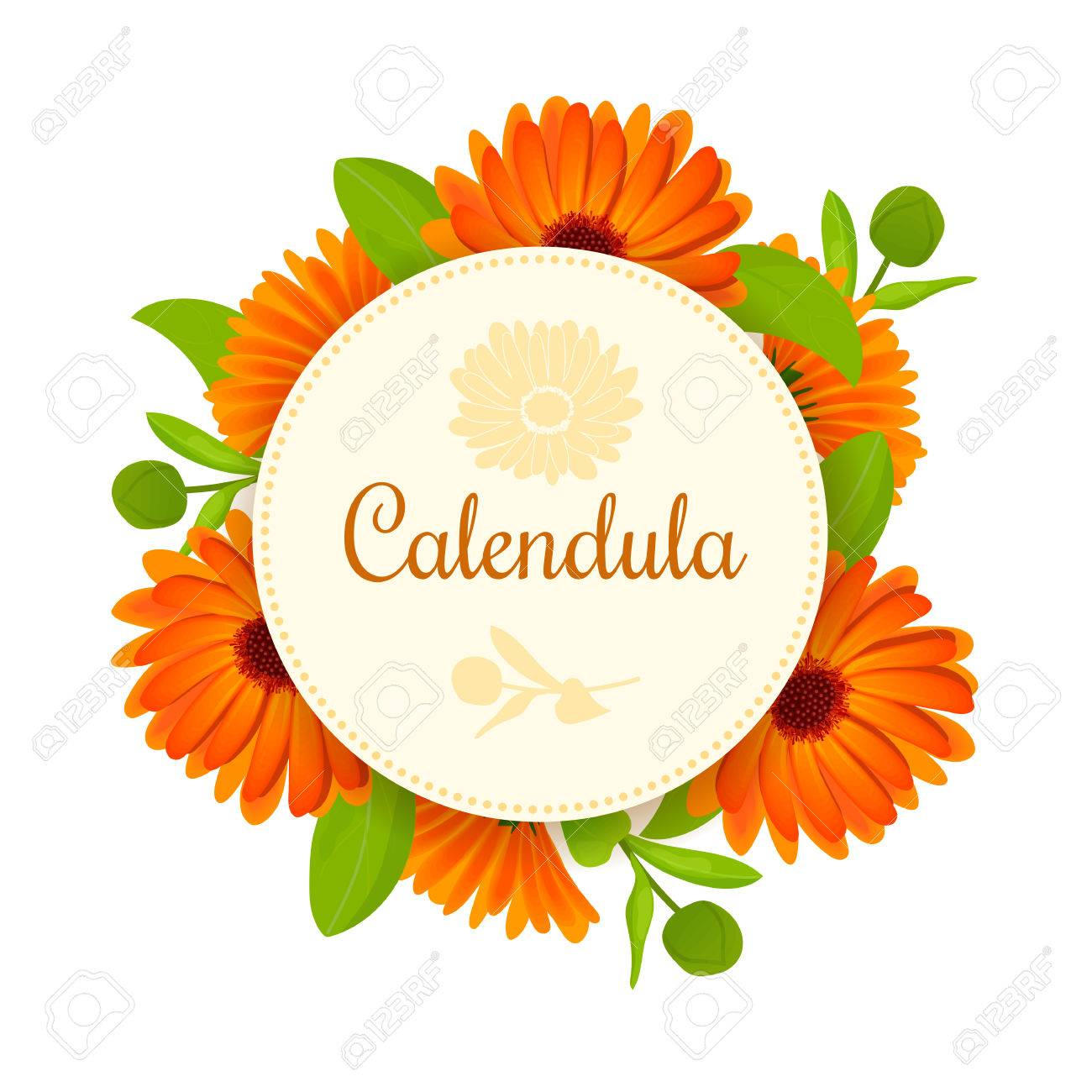 calendula flowers with leaves round badge with text royalty free