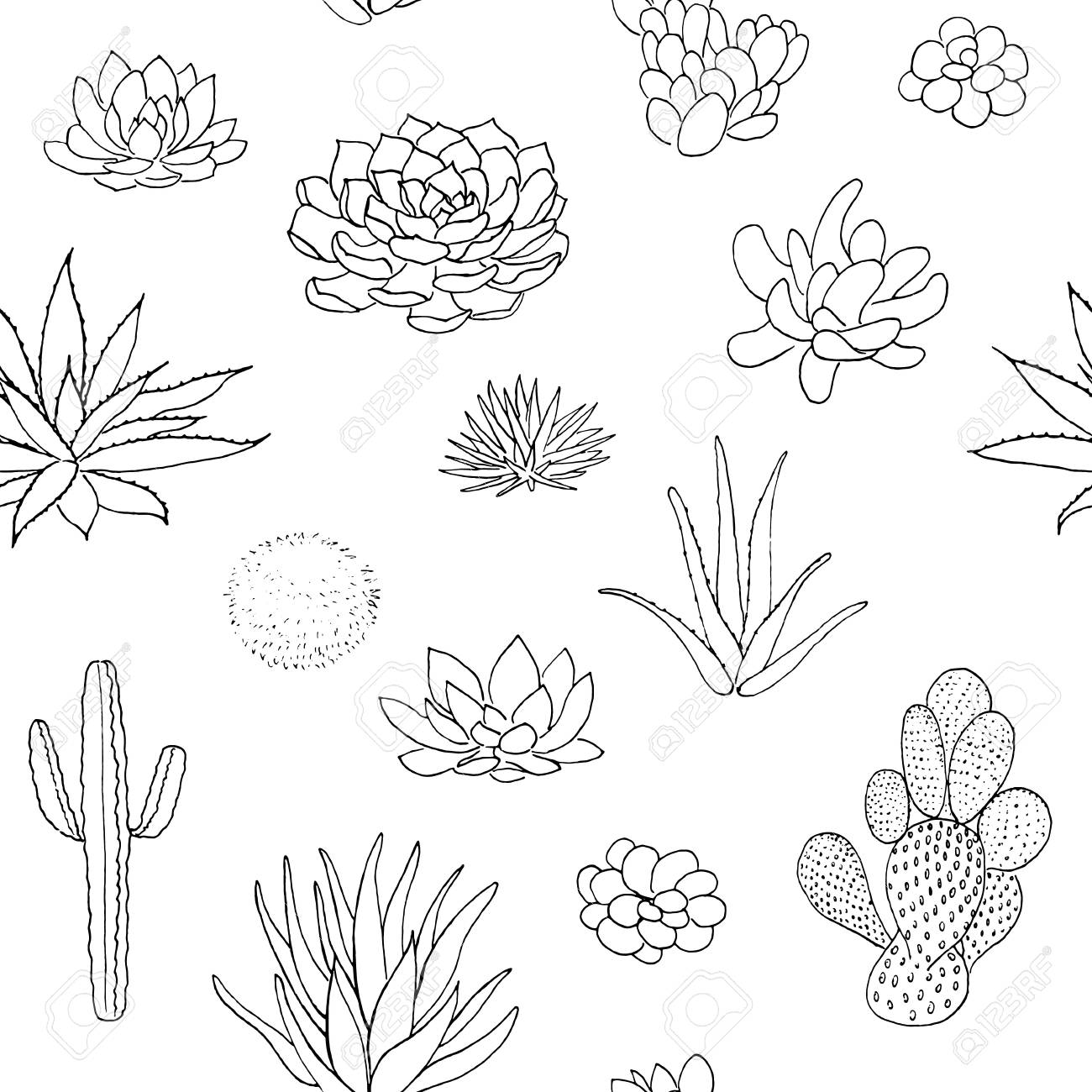 Succulent Seamless Pattern Hand Drawn Vector Illustration Outline Royalty Free Cliparts Vectors And Stock Illustration Image 109681170