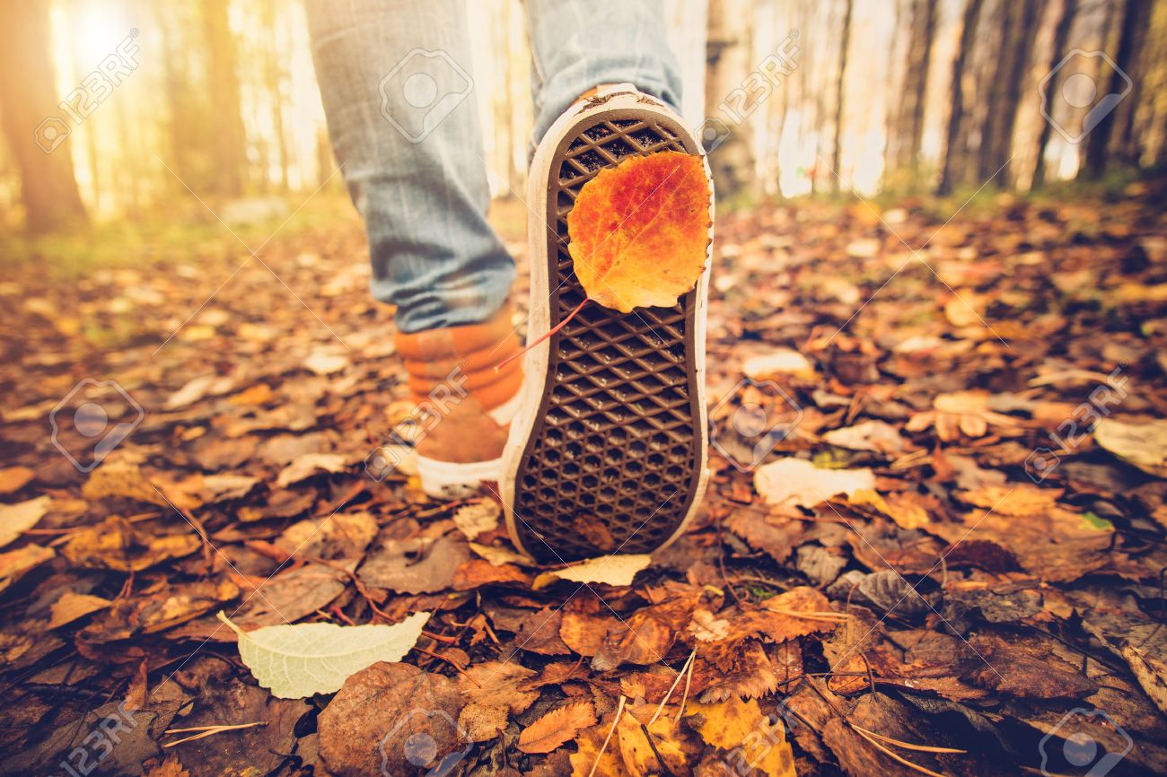 Feet sneakers walking on fall leaves Outdoor with Autumn season nature on background Lifestyle Fashion trendy style - 55631812