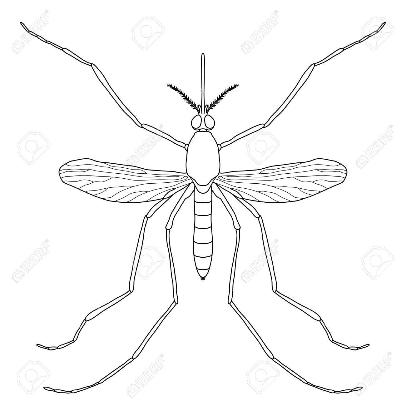 Insekt. Eine Realistische Mücke. Culex Pipiens Mosquito Silhouette ...