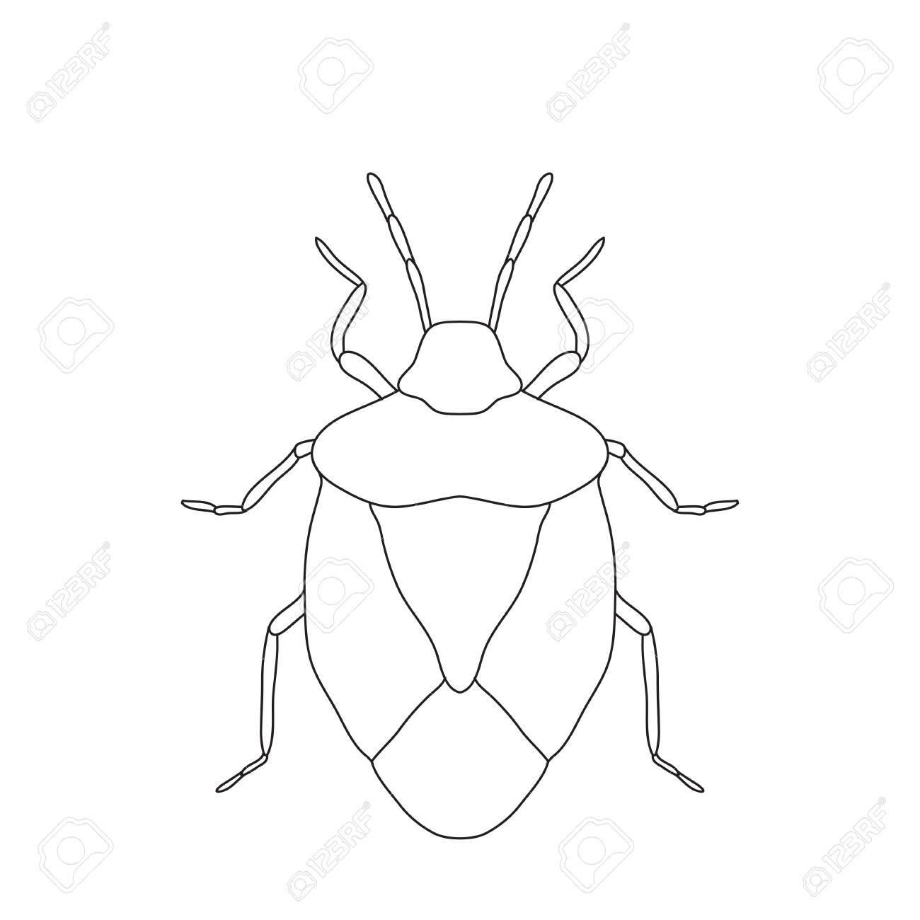 盾バグ生育 Prasinaカメ虫のスケッチ 白い背景で隔離の亀虫