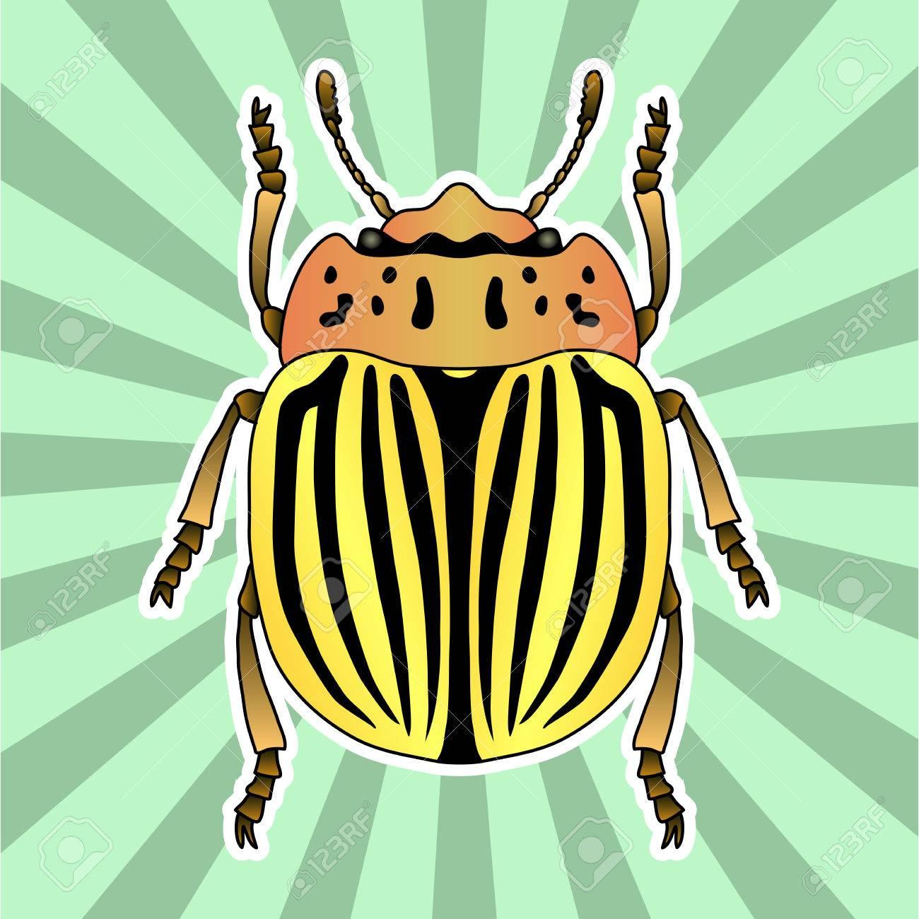 Anatomía De Insectos. Escarabajo De La Patata De Colorado Pegatina ...