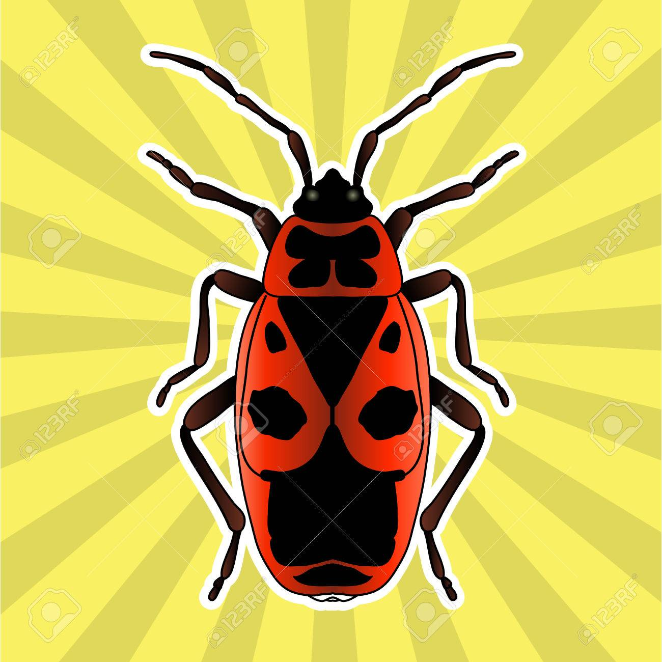 Anatomía De Insectos. Pegatina Pyrrhocoris Apterus. Escarabajo. Bug ...