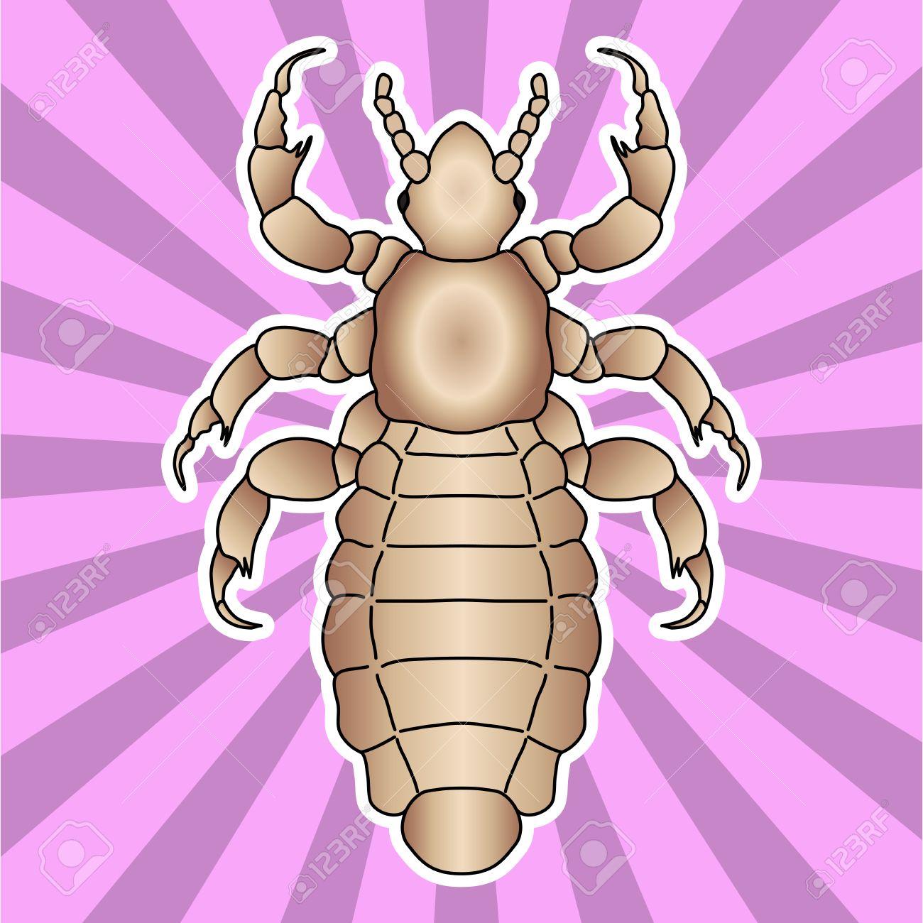 Anatomía De Insectos. Pegatina Cabeza Piojo Humano. Pediculus ...